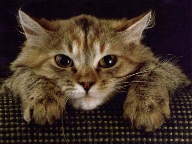 Zvracanie predchádza stagnujúci stav mačky