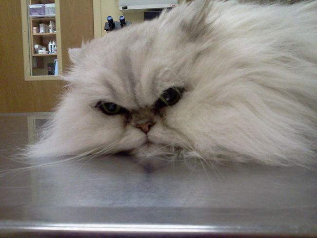 Pri prvom náznaku zvracanie, obráťte sa na veterinárnu kliniku