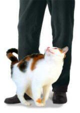 Zašto mačka ostavlja trag?