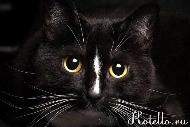 A ako sa ukázalo, fúzy sú mačky po celom tele