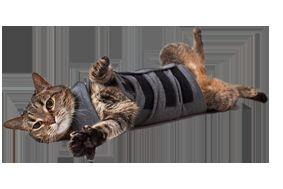 Вест за котки