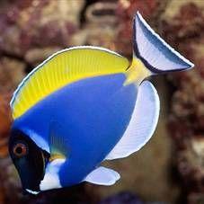 Viviparan akvarij riba: vrsta, posebno sadržaj