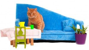 Животът на жилищата котки