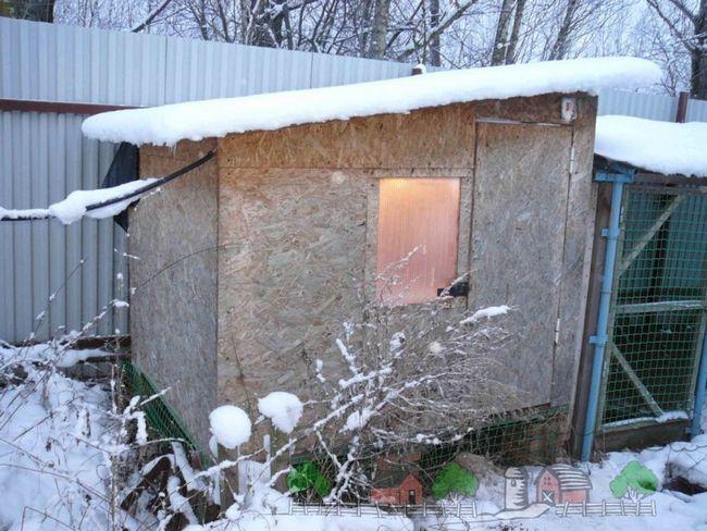 Coop de iarnă în zăpadă fotografie