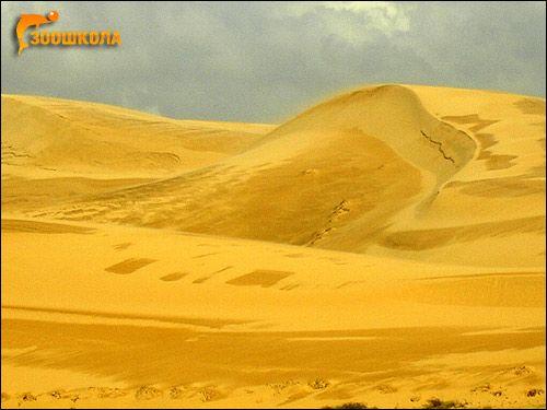 Vietnamul de Sud. Deșert după ploaie. Foto, Foto