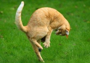 hrajúci mačky