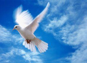 Faceți cunoștință cu porumbeii Ucraina