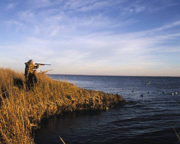 lov jesen za Mallard